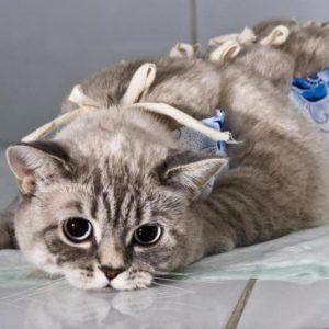 Виды и способы стерилизации кошек