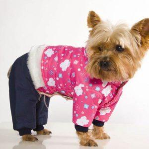 Модная одежка для любимых собак