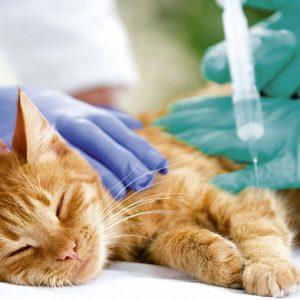 Общая анестезия: подготовка, риски, поведение кошки