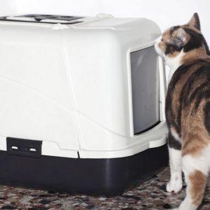 Туалеты для кошек закрытые: выбираем комфорт для домашних питомцев