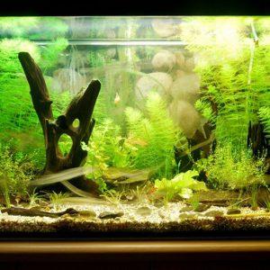 Как выбрать аквариум — еще парочка советов для новичков