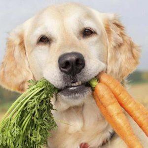Какие овощи можно и нужно давать собаке