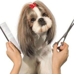 Как ухаживать за шерстью собаки летом?