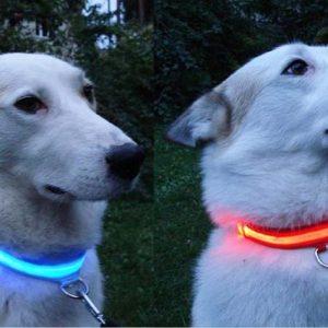 Светодиодные ошейники для собак