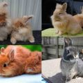 Популярные породы домашних карликовых кроликов