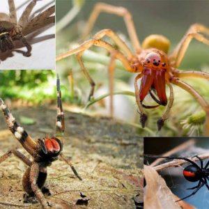 Список самых ядовитых пауков